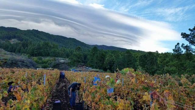 Garafía acogerá el Primer Concurso Regional de Vinos Ecológicos de Canarias