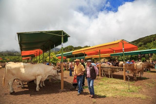 Garafía, teme por el futuro de la ganadería | Radio Luz