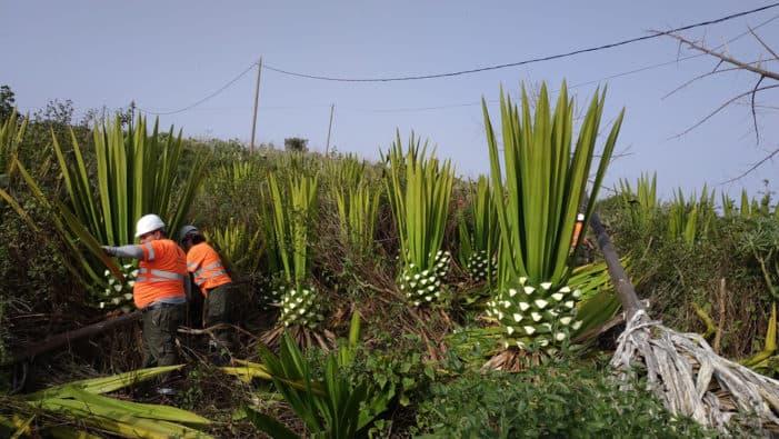 Política Territorial lleva a Garafía las charlas formativas sobre el control de especies vegetales invasoras