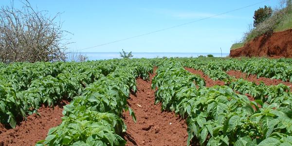 Agricultura en Villa de Garafía (Foto: Rafael)