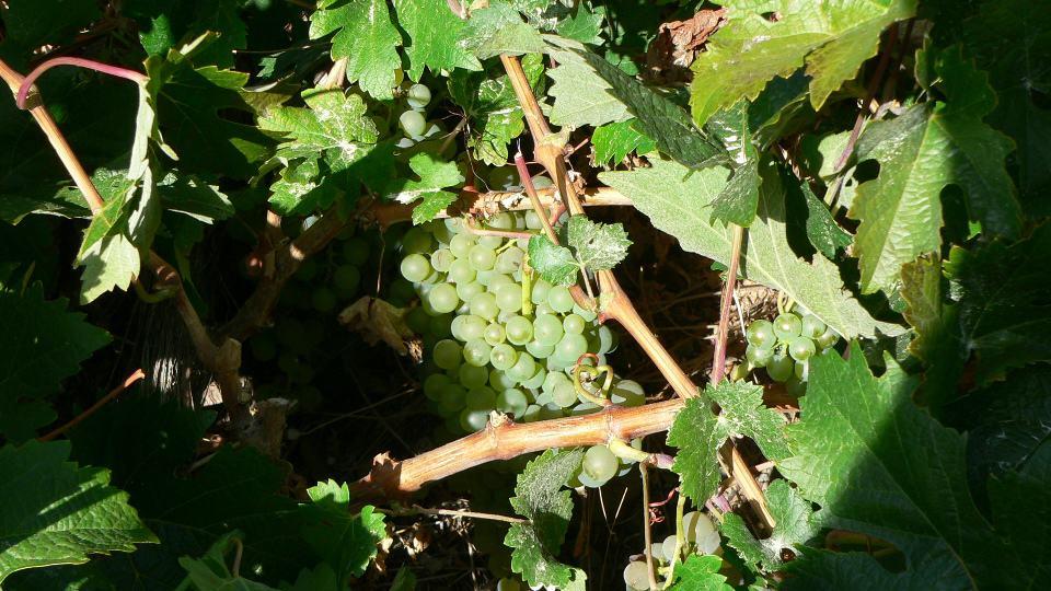 Varios vinos de Garafía entre los mejores de Canarias según la Guía Peñín