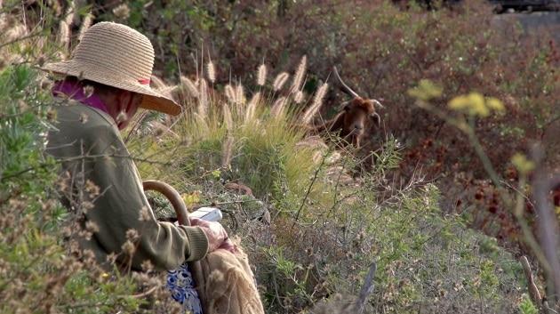 La Comarca Noroeste conmemora el Día Internacional de La Mujer Rural con numerosas actividades