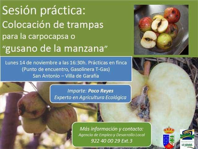 Sesión Práctica, cómo colocar trampas para la colapsa o gusano de la manzana