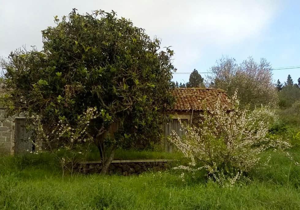 Garafía acogerá un curso de poda e injerto de frutales  | Radio Luz