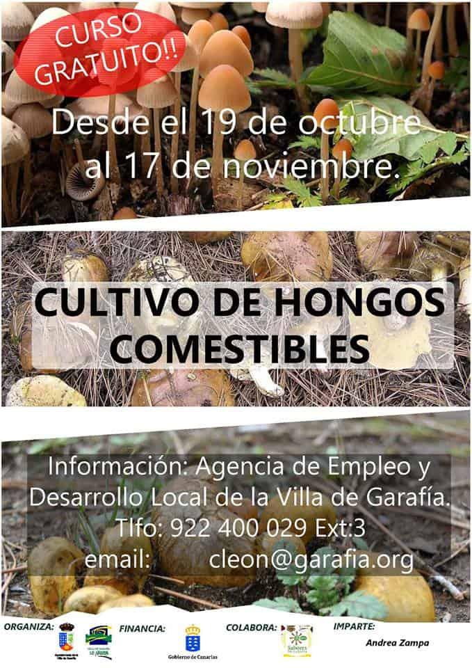 Curso de Cultivo de Hongos Comestibles