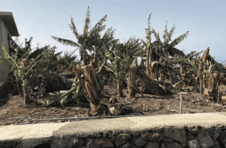 Puntagorda, Tijarafe y Garafía piden que la comarca sea declarada 'zona catastrófica'
